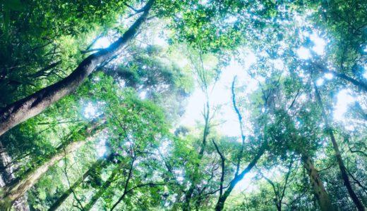 【伊佐市の観光】奥十曽渓谷の奥の奥まで季節外れのエドヒガン桜を見に行ってきました。これは行くべし。