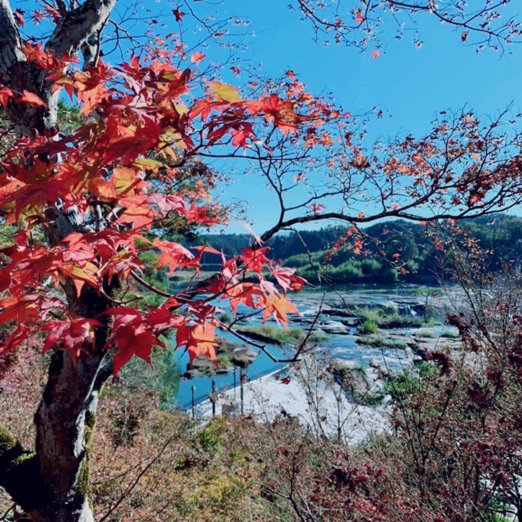 曽木の滝公園もみじ祭り 曽木の滝