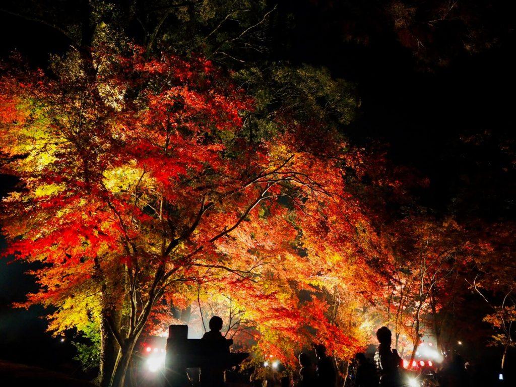 伊佐市_曽木の滝_曽木の滝公園もみじ祭り_もみじライトアップ