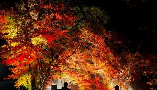 【伊佐市の観光】曽木の滝公園もみじ祭りが素敵すぎた……。