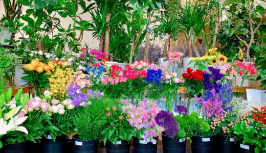 【花しん(はなしん)】ドライフラワーがこんなに!!綺麗な生花も!伊佐市の素敵なお花屋さんに行ってみない?
