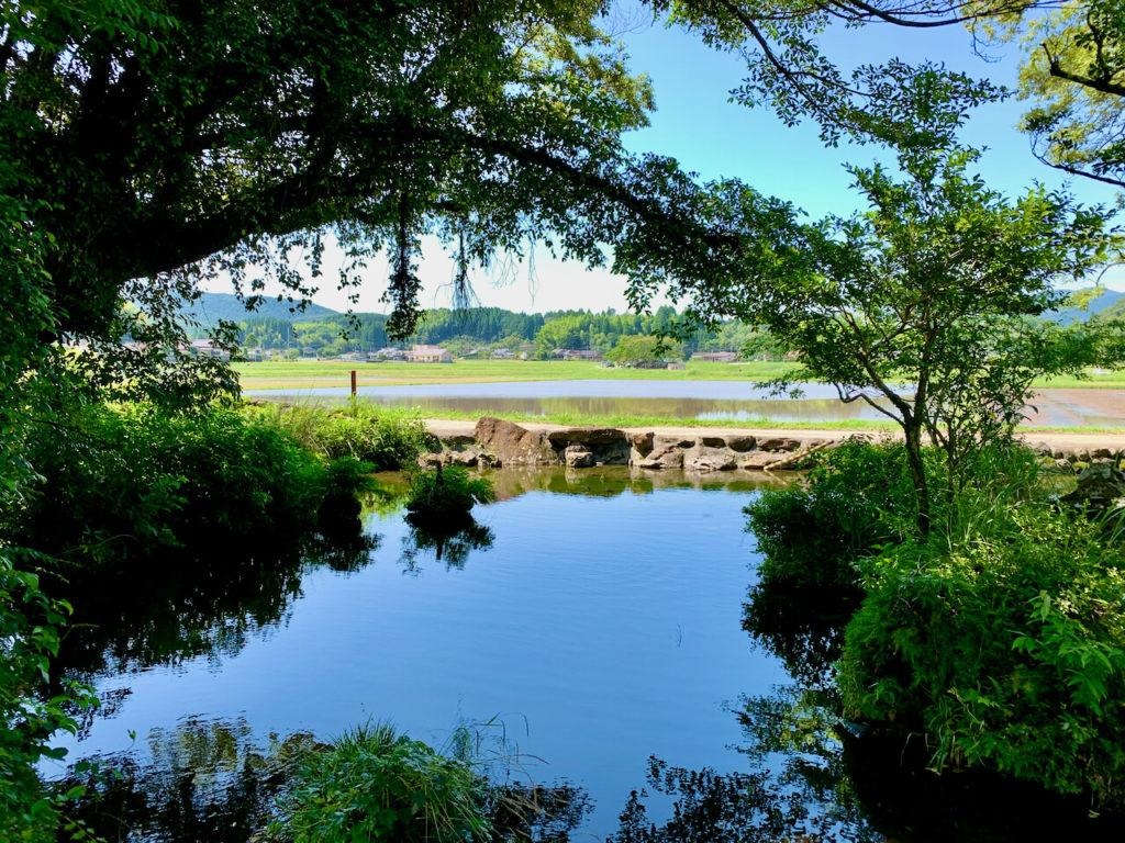 鳥神神社 湧水池
