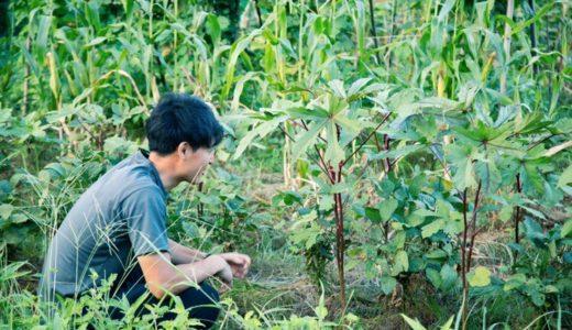 古民家のセルフリノベに失敗した話(番外編)– 野菜を作り、山菜を採り、魚を獲って食う。自給自足への挑戦!!–