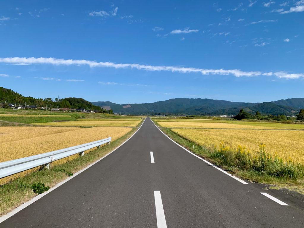 稲穂に挟まれた道路