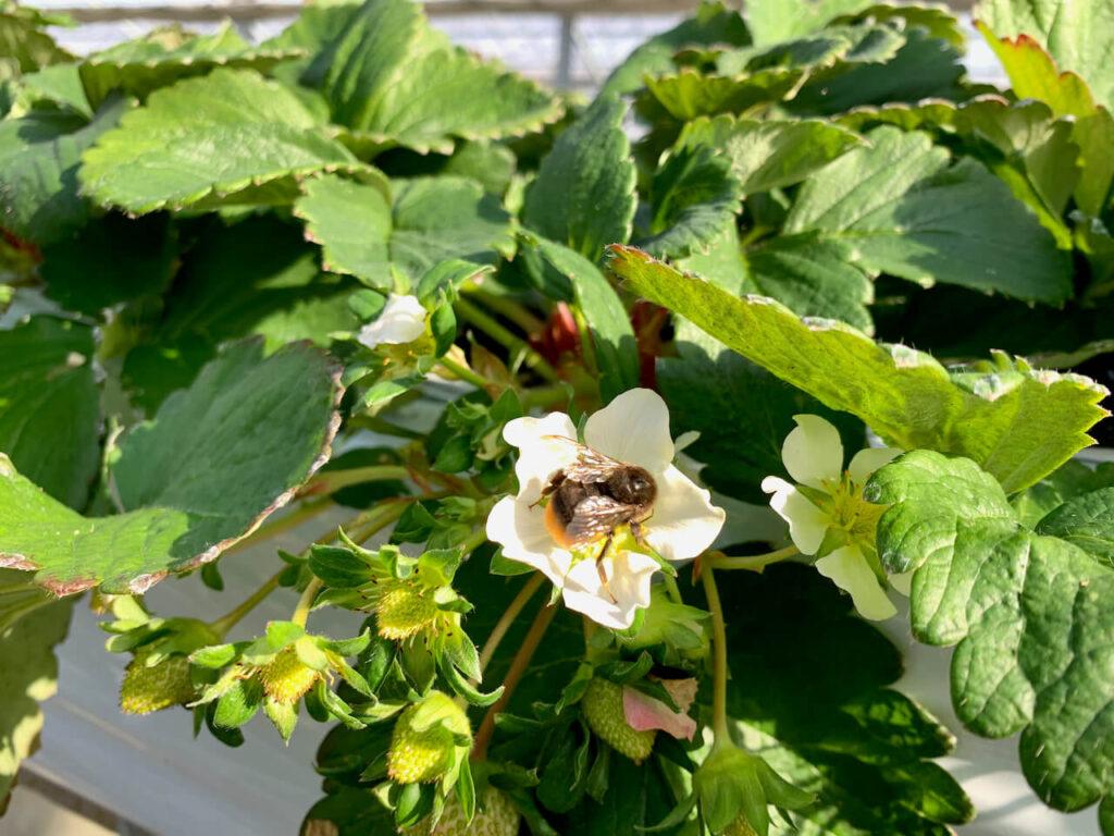 大国ファーム 蜂
