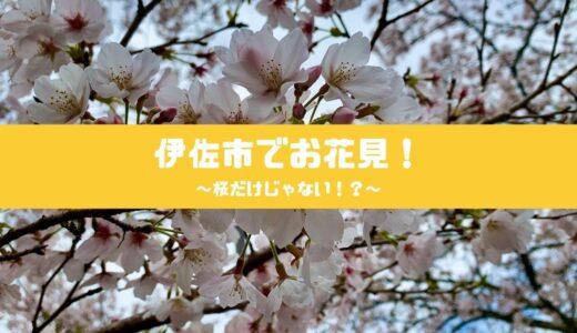 伊佐市でお花見!桜だけじゃない!?