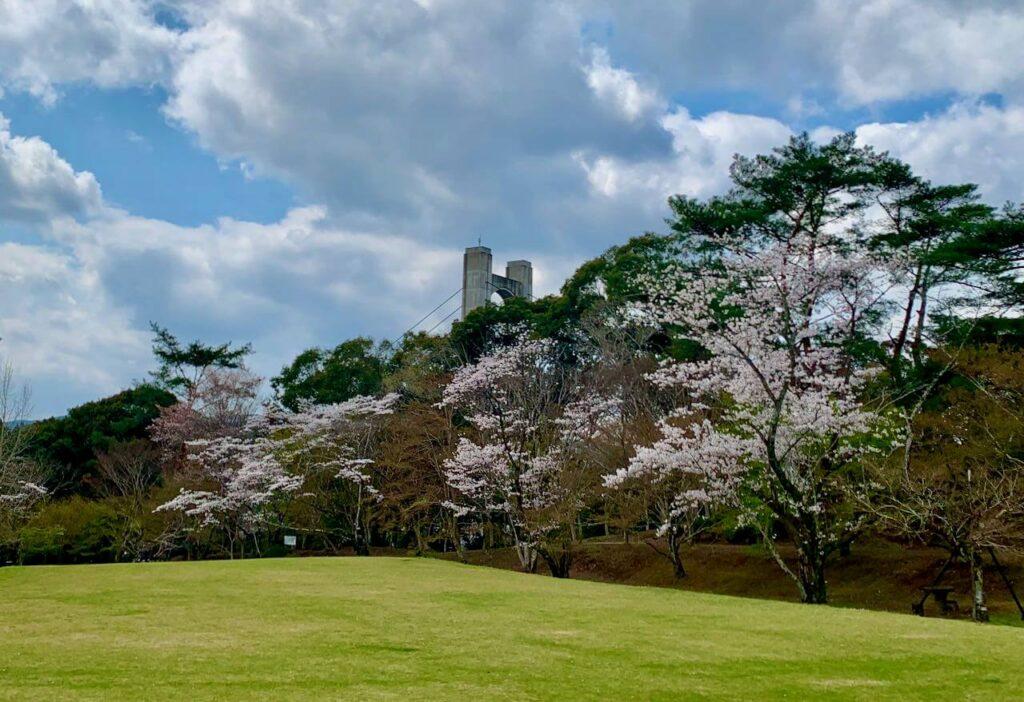 新曽木大橋と桜