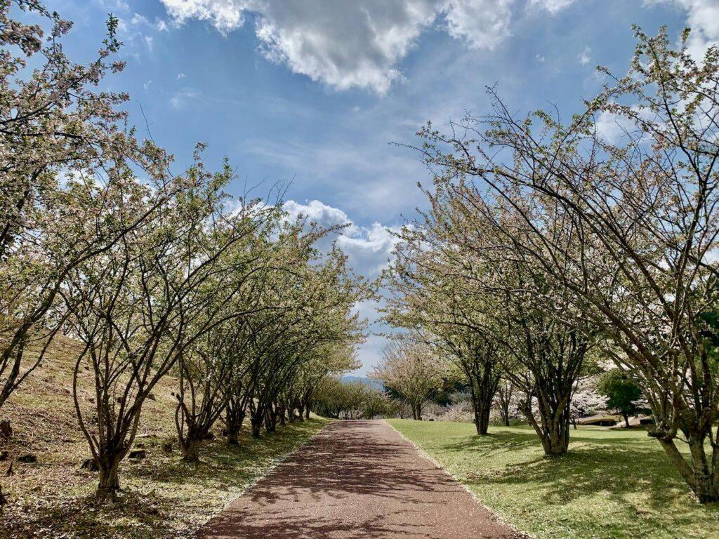 十曽池公園カイドウ並木